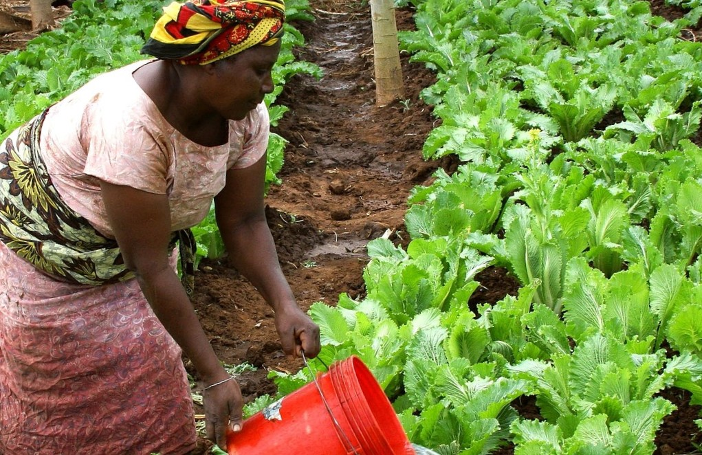 Une coopérative agricole au Togo pour soutenir les paysans isolés
